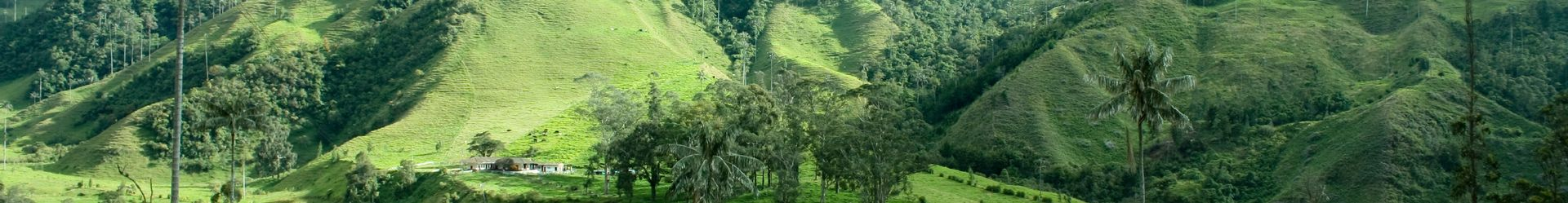 Cocora valley et the palm - Colombie©iStock.jpg